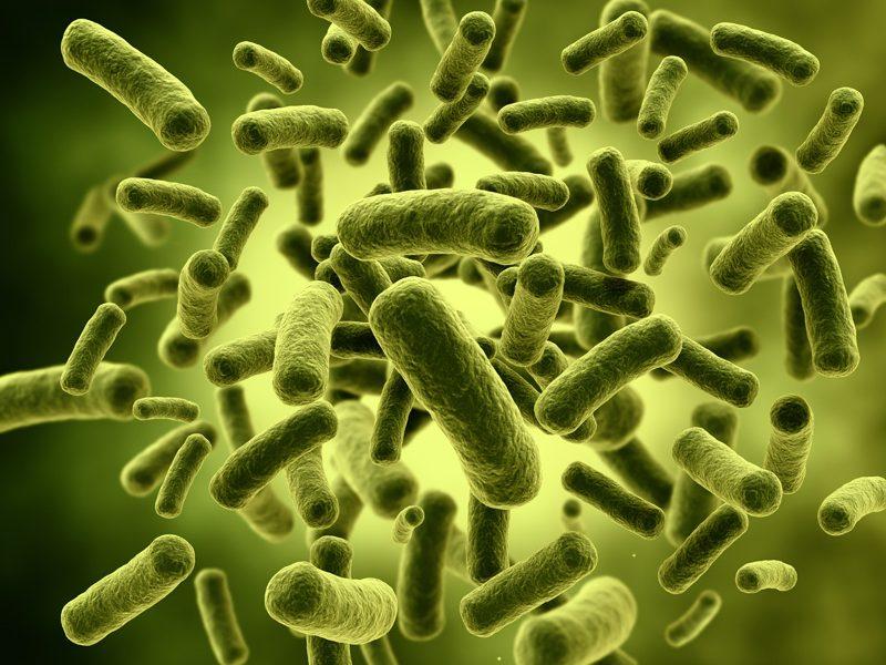 Lactobacillus acidophilus- ĐẶC TRỊ tiêu chảy cấp